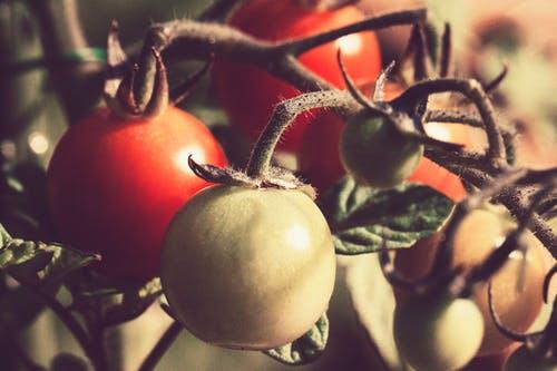 Hochbeete kaufen ist die perfekte Lösung für den Garten